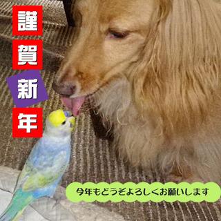 IMGP0091.JPG-01-01.jpg