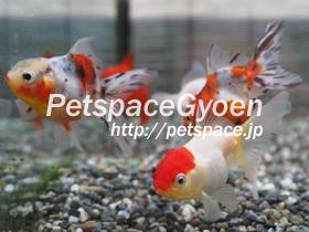P5230137.jpg